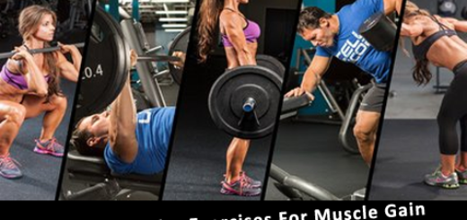 5 Most Popular Exercises For Muscle Gain