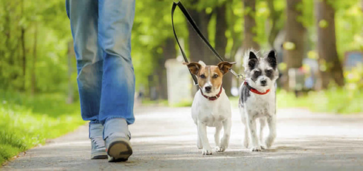 What to Question while hiring a pet sitter?