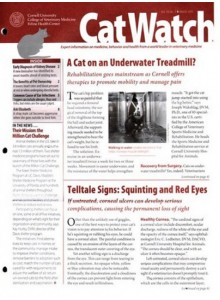 Catwatch Magazine Subscription